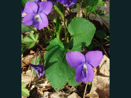 032 Wild Flowers
