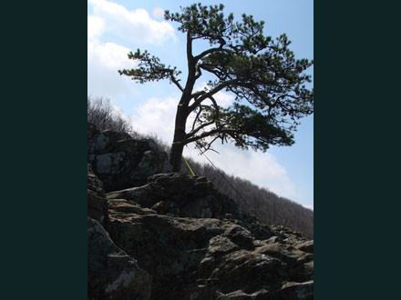 050 Raven's Roost, Blue Ridge Pky